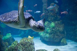 Turtle - Noumea Aquarium